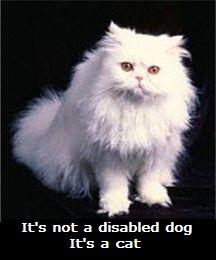 It's not a disabled dog.  It's a cat.